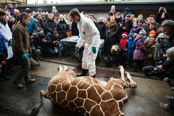 Controversial Copenhagen Zoo Official: Zoos Are Selling Disney