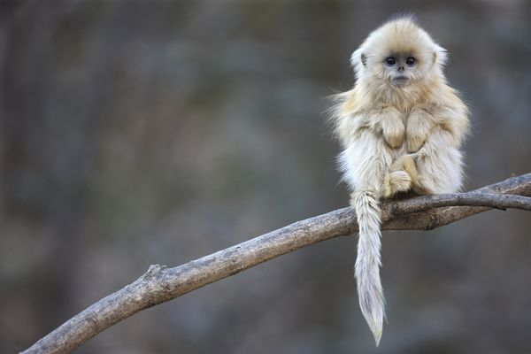 Monkey Day Pictures: Our Favorite Primates Around the World