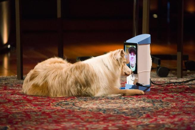 Why Can't Dogs Recognize Us on Our Phones and Tablets?