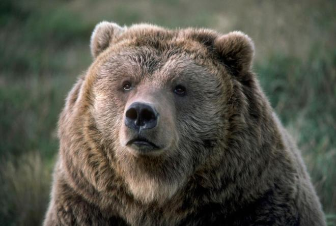 What Do You Do With a Bear That Kills a Person?