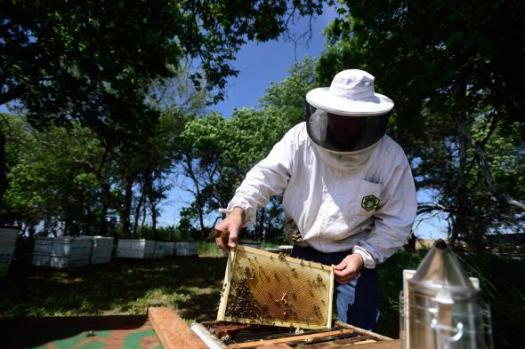 01beekeeping-north-dakota-adapt-590-1