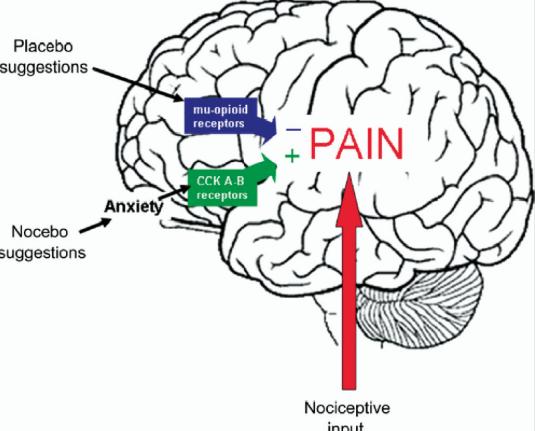 painanxiety