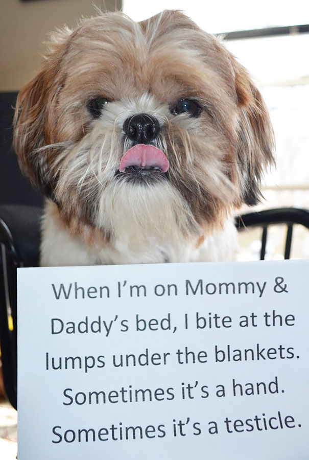 dog-shaming-39__605