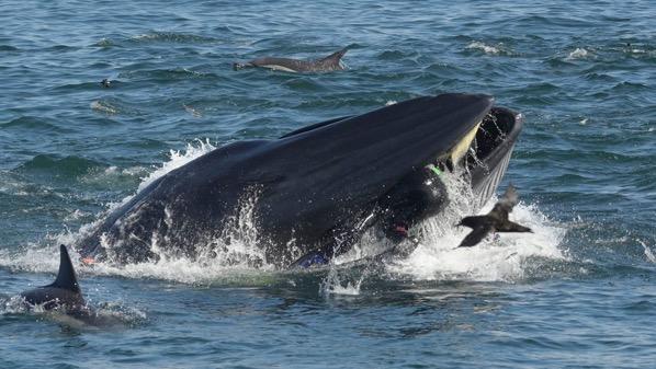 Whale man barcroft