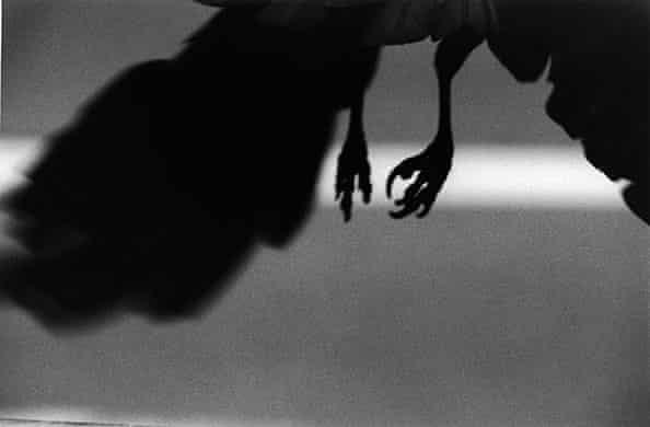 Ravens by Masahisha Fukas 002